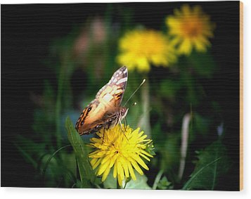 Butterfly Kisses Wood Print by Karen M Scovill