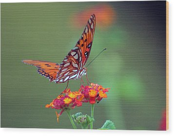 Butterfly Majestic Wood Print