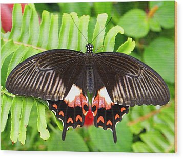Butterfly Maze Wood Print by Jean Haynes