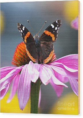 Wood Print featuring the photograph Butterfly On Cone Flower by Lila Fisher-Wenzel