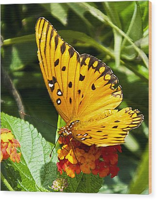 Wood Print featuring the photograph Butterfly On Lantana by Bill Barber