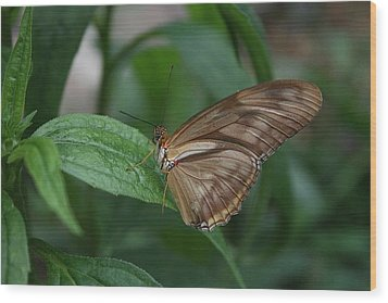 Wood Print featuring the photograph Butterfly On Leaf by Cathy Harper