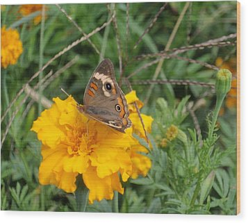 Wood Print featuring the photograph Butterfly On Marigold by Beth Akerman