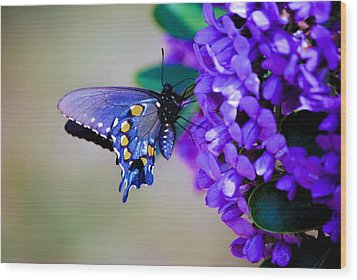 Wood Print featuring the photograph Butterfly On Mountain Laurel by Debbie Karnes