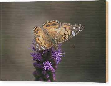Wood Print featuring the photograph Butterfly In Solo by Cathy Harper
