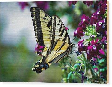 Butterfly On Purple Flowers Wood Print