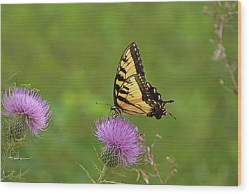Wood Print featuring the photograph Butterfly On Thistle by Sandy Keeton