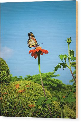 Butterfly Perch Wood Print