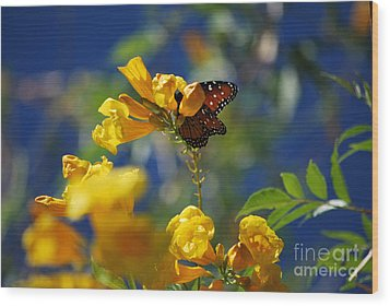 Wood Print featuring the photograph Butterfly Pollinating Flowers  by Donna Greene