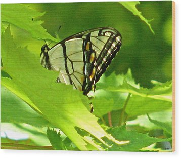 Butterfly Rest In The Leaves Wood Print by Debra     Vatalaro