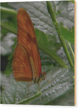 Wood Print featuring the photograph Butterfly Smile by Manuela Constantin