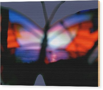 Butterfly Sunsets Collection  Wood Print by Debra     Vatalaro