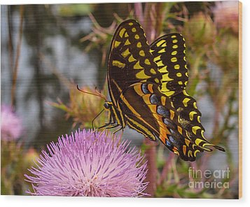 Butterfly Visit Wood Print by Tom Claud