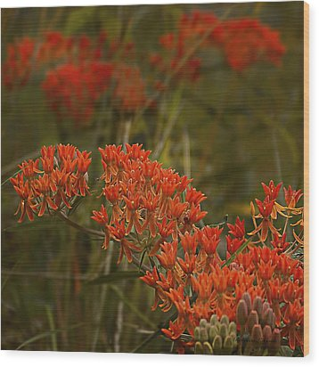Wood Print featuring the photograph Butterfly Weed Asclepias Tuberosa by Bellesouth Studio