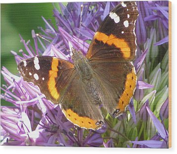 Butterfly With Allium Wood Print by Alfred Ng