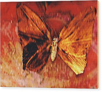 Butterfly With Dark Wing Wood Print by Anne-Elizabeth Whiteway