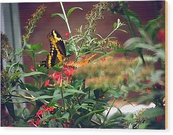 Butterfly World Watercolor 2 Wood Print by Steve Ohlsen