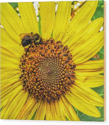 Wood Print featuring the photograph Buzz Word-sunflower by Jame Hayes
