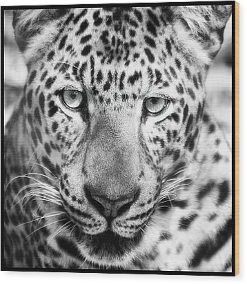 Bw Leopard Wood Print