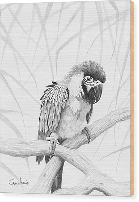 Bw Parrot Wood Print