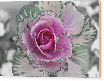 Cabbage  Flower Wood Print by Terence Davis