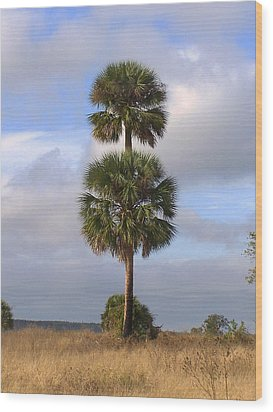 Wood Print featuring the photograph Cabbage Palms by Peg Urban
