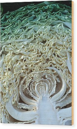 Cabbage Universe Wood Print by Laurie Paci