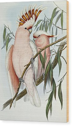Cacatua Leadbeateri Wood Print by John Gould