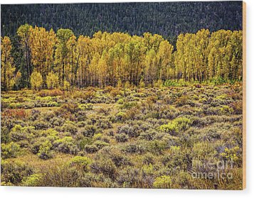 Cache La Poudre River Colors Wood Print by Jon Burch Photography
