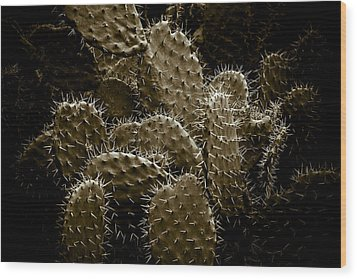 Cactaceae Wood Print by Frank Tschakert