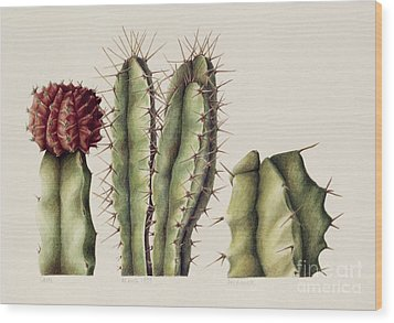 Cacti Wood Print by Annabel Barrett