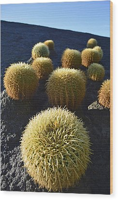 Wood Print featuring the photograph Cacti On The Roof by Marek Stepan