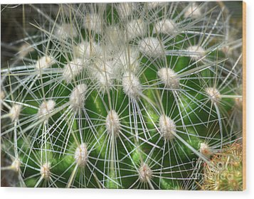 Wood Print featuring the photograph Cactus 1 by Jim and Emily Bush