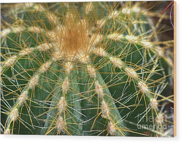 Wood Print featuring the photograph Cactus 2 by Jim and Emily Bush