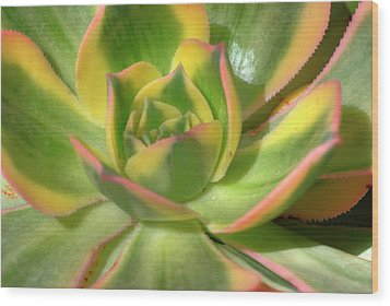 Wood Print featuring the photograph Cactus 4 by Jim and Emily Bush