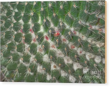 Wood Print featuring the photograph Cactus 5 by Jim and Emily Bush