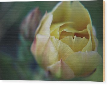 Wood Print featuring the photograph Cactus Beauty by Amee Cave