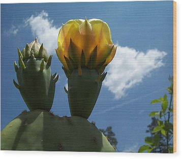 Wood Print featuring the photograph Cactus Beginning To Bloom by Robin Coaker