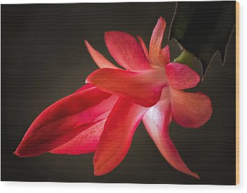 Cactus Bloom Aglow Wood Print by James Barber