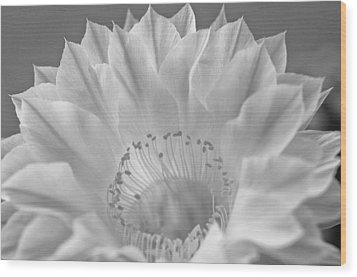 Cactus Bloom Burst Wood Print