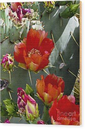 Cactus Blossom Wood Print