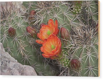 Cactus Blossoms Wood Print by Monte Stevens