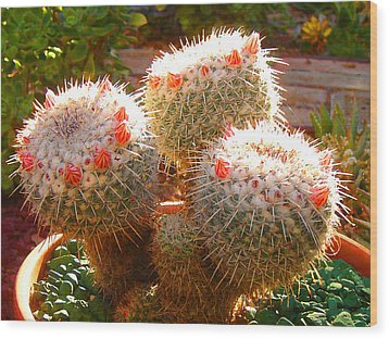 Cactus Buds Wood Print by Amy Vangsgard