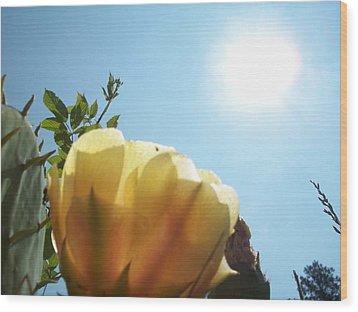 Cactus Enjoying Sun Light Wood Print