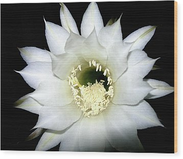 Wood Print featuring the photograph Cactus Flower At Night by Randy Rosenberger
