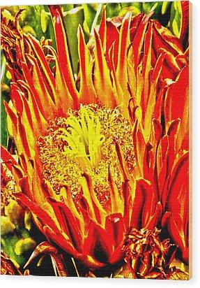 Cactus Flower Wood Print by Judi Saunders