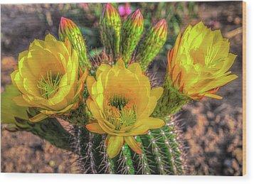 Cactus Flower Wood Print by Mark Dunton