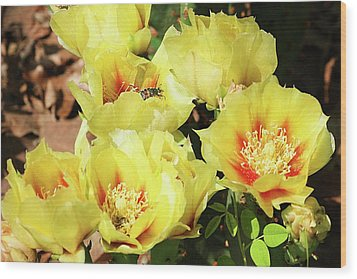 Wood Print featuring the photograph Cactus Flowers And Friend by Sheila Brown