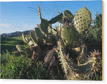 Wood Print featuring the photograph Cactus In The Mountains by Matt Harang
