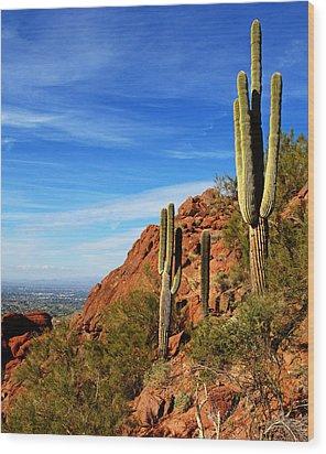 Cactus On Camelback 14x17 Wood Print